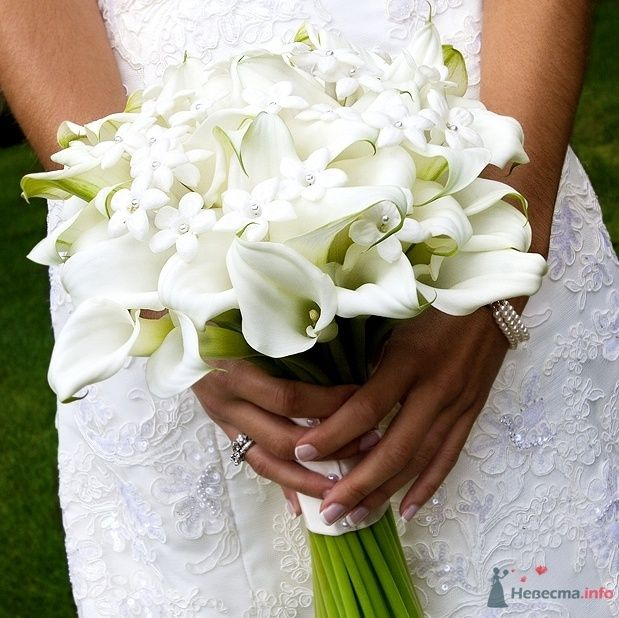 Букет невесты из белых калл и бувардии, завязанный белой атласной - фото 66000 Котяшин