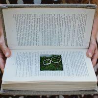 Книга с кольцами