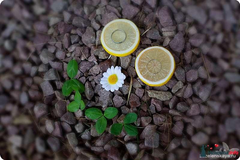 Фото 108534 в коллекции My lemon&camomile wedding - Shuga