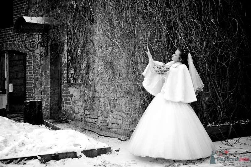 """Свадьба Алексея и Натальи - фото 66026 Студия """"MAGIQUE"""""""