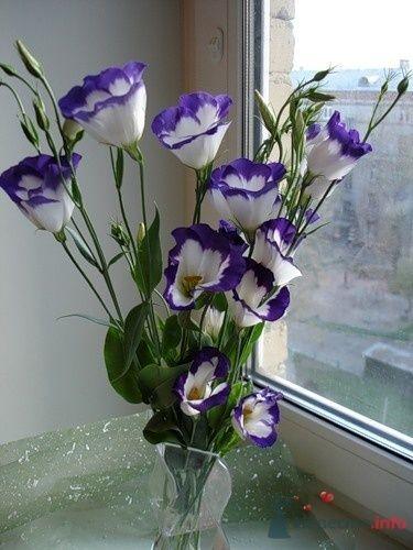 Фото 70806 в коллекции PURPLE Flowers For Bride - Brittany