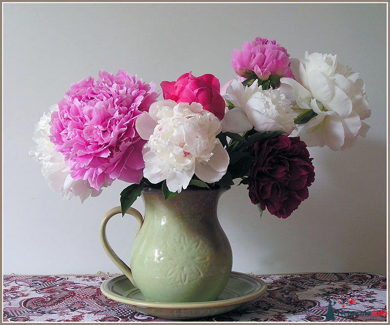 Букет из белых, розовых, красных и бордовых пион в кувшине.