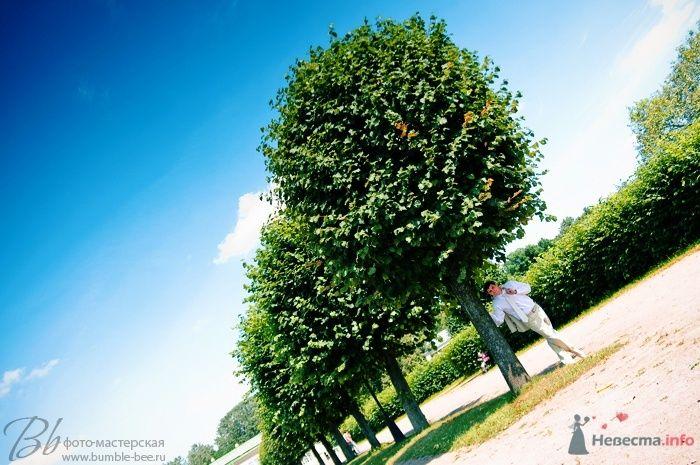 Cвадебная фотография - фото 68520 Bumble-bee