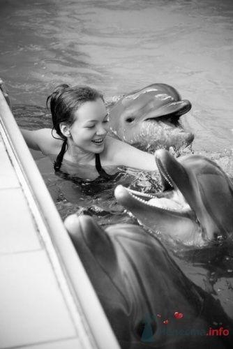 фотоистория с дельфинами, Елена и Андрей - фото 13291 Свадебные фотоистории от Андрея Егорова