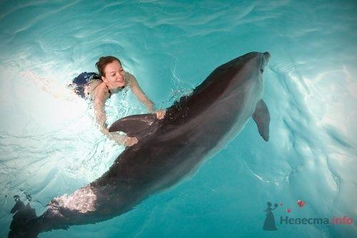 Романтическая фотосъемка. Дельфинарий: Елена и Андрей - фото 13297 Свадебные фотоистории от Андрея Егорова