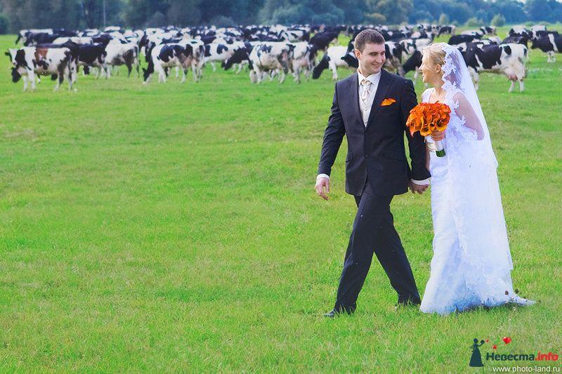 Катя и Саша. Свадьбы форумчанок  - фото 91670 Свадебные фотоистории от Андрея Егорова