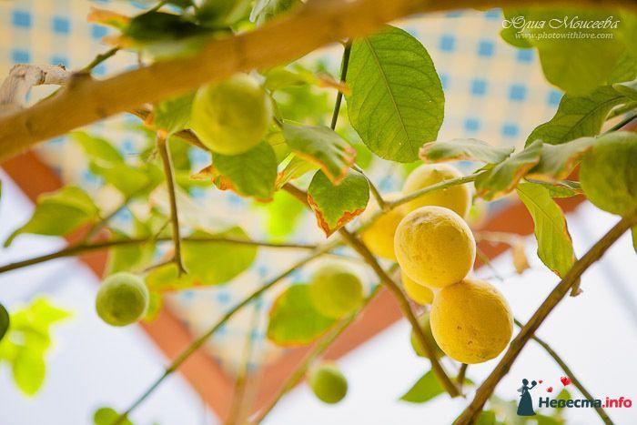 Фото 137289 в коллекции Our Wedding April 6, 2010 - Шоколадка
