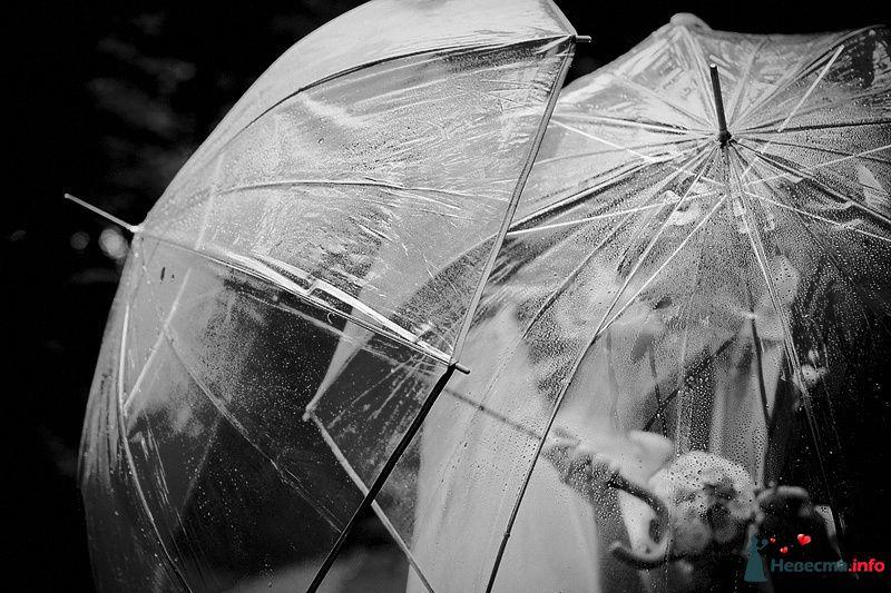 Фото 86791 в коллекции Борис и Тоня - Свадебный фотограф. Татьяна Гаранина