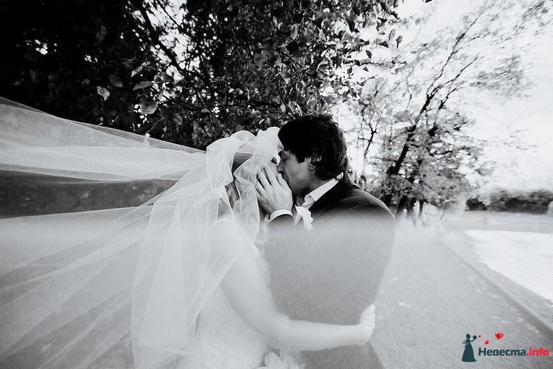 Жених и невеста целуются в парке возле дерева - фото 88973 Свадебный фотограф. Татьяна Гаранина