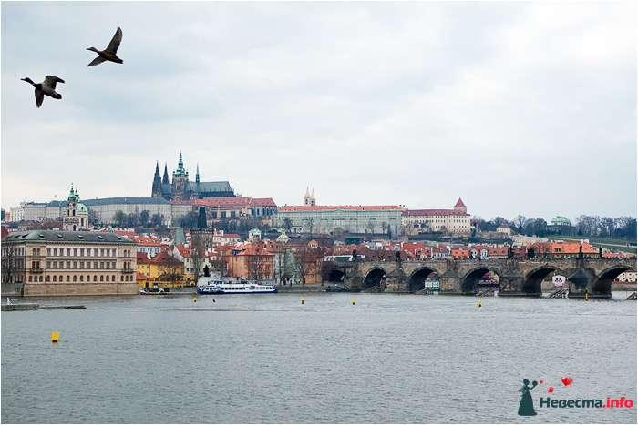 Фото 90703 в коллекции Прага - Дуэт фотогрфов Никифоров Костя и Гордеев Сергей