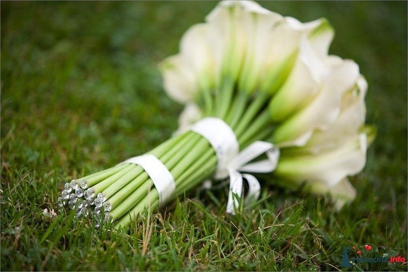Фото 122900 в коллекции Мои фотографии - Невеста Eva