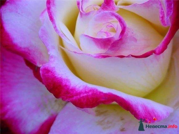 аватар - фото 81106 Spring_woman