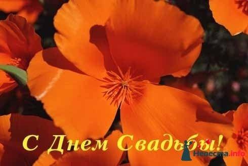 Фото 123718 в коллекции Мои фотографии - Taisiya*