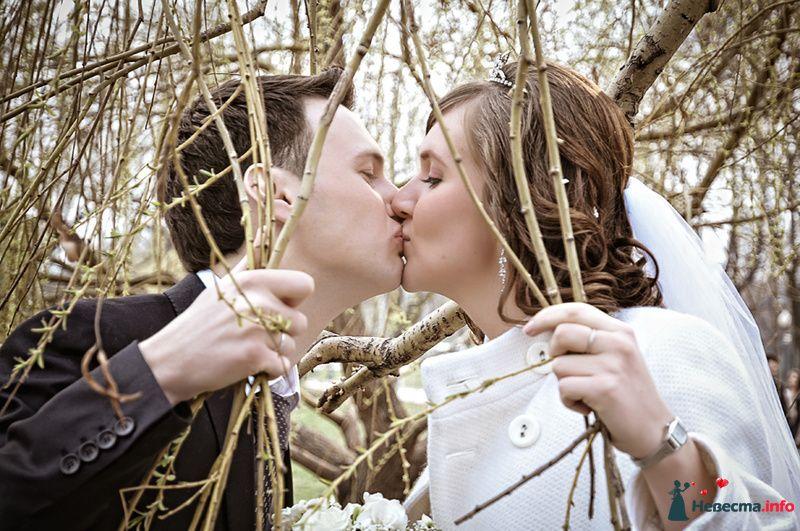 Жених и невеста целуются возле дерева
