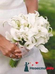 Фото 84857 в коллекции Букет Невесты - Свадебный распорядитель. Яна