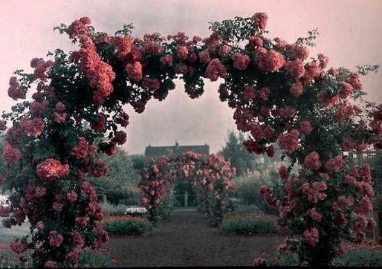 Фото 886859 в коллекции Свадьбы/ Лавстори - Маша Гудова - фотограф в Италии