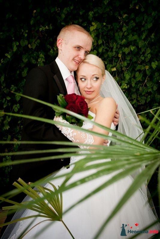 Фото 87358 в коллекции Amatour (свадебное) - Amatour