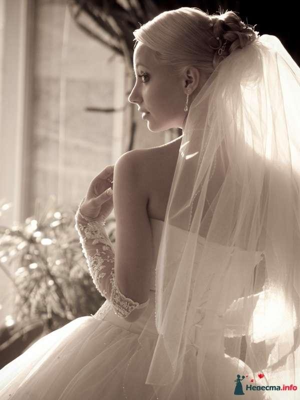Фото 87359 в коллекции Amatour (свадебное) - Amatour