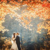 Золотая осень. Краски осени. Оранжевая листва. Яркое фото. Поцелуй. Молодожены. Силуэты. Маленькие фигуры. Природа. Ветви деревьев.