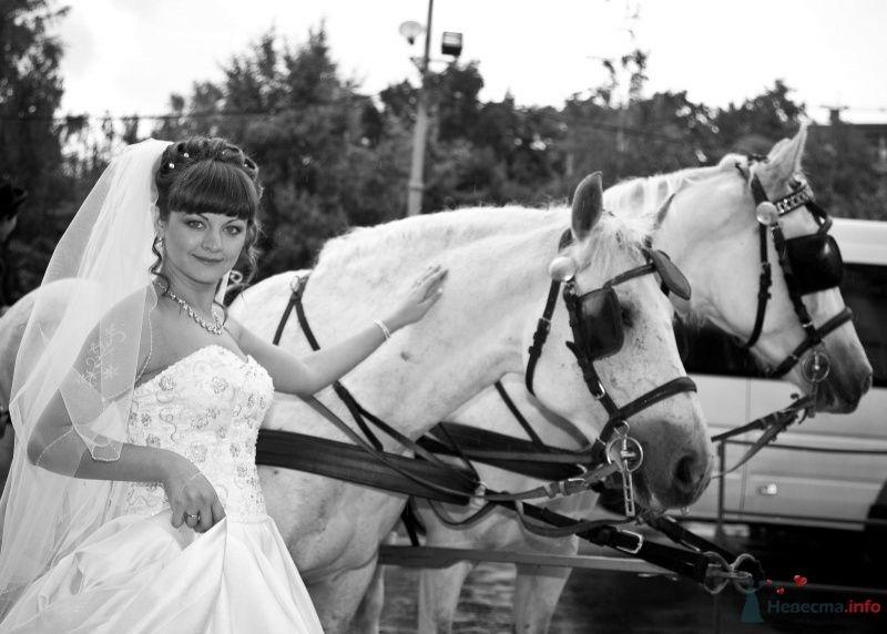 Фото 37259 в коллекции Свадебные фото - Поля