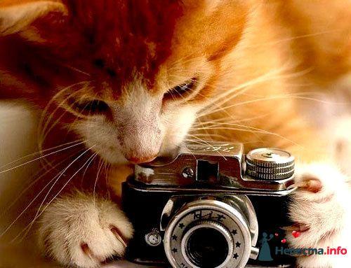 Фото 99284 в коллекции Мои фотографии - Ajolana