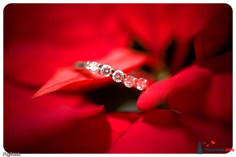 Фото 100644 в коллекции Wedding Day - фотограф Елена Файзуллина