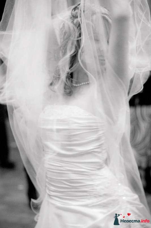 Фото 102670 в коллекции Свадебные фотографии - Алексей 89059256709