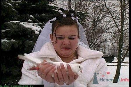 Фото 21740 в коллекции Прикольное - Теша