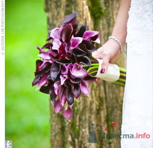 Фото 71525 в коллекции purple - verasin