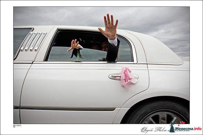 Свадебный фотограф Николай Сульженко - фото 109421 Свадебный фотограф Николай Сульженко