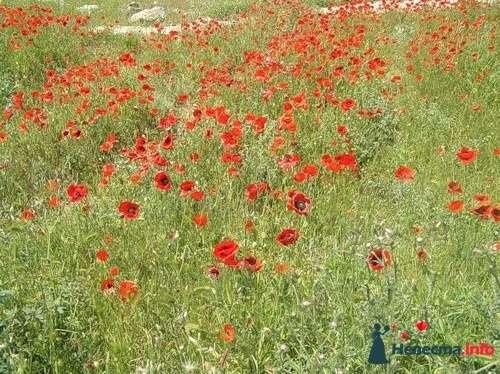 Фото 110784 в коллекции Мои фотографии - lisenok-82