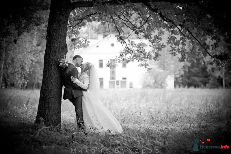 Фото 249682 в коллекции Wedding - Trofimovtv - видеосъемка