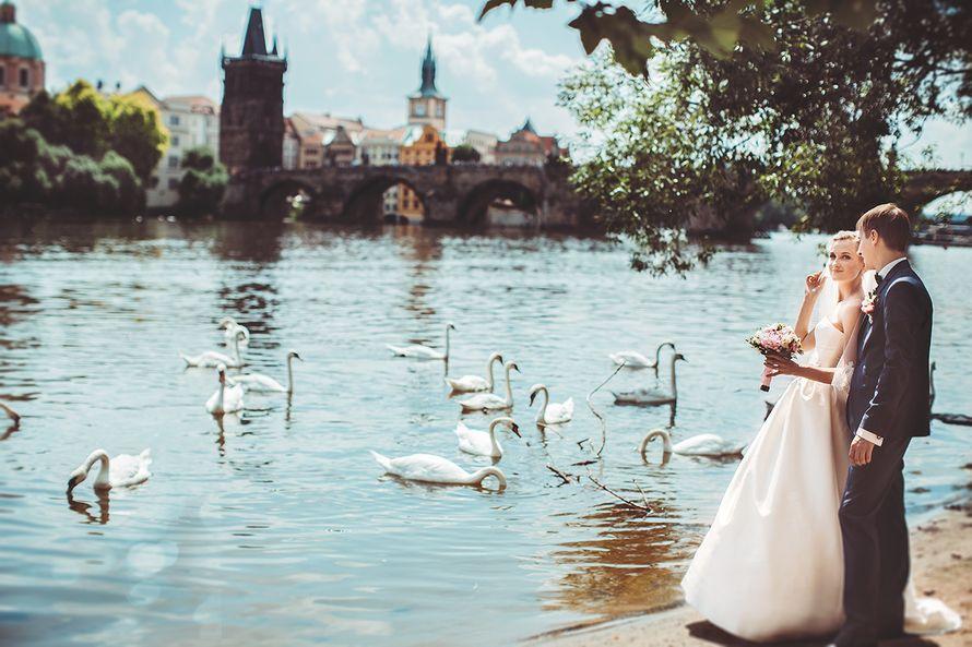 Фото 2755049 в коллекции Свадьба Елены и Юрия, июль 2014, Прага - Фотограф Настя Ковалева