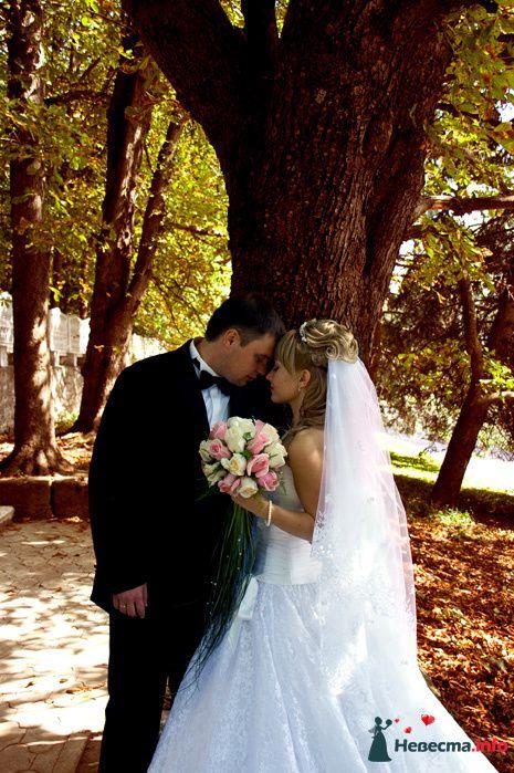 Фото 116316 в коллекции Свадебный альбом - Фотограф Комаров Дмитрий