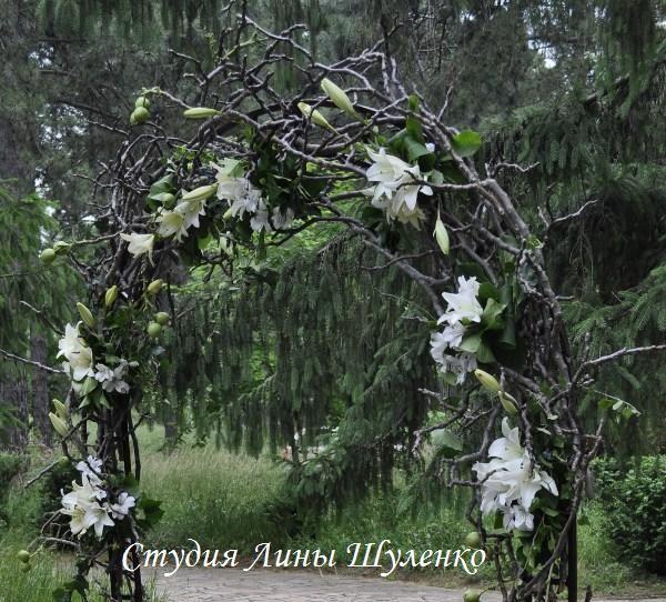 Рустикальная арка из веток.Выездная церемония в стиле рустик в Симферополе и Крыму.