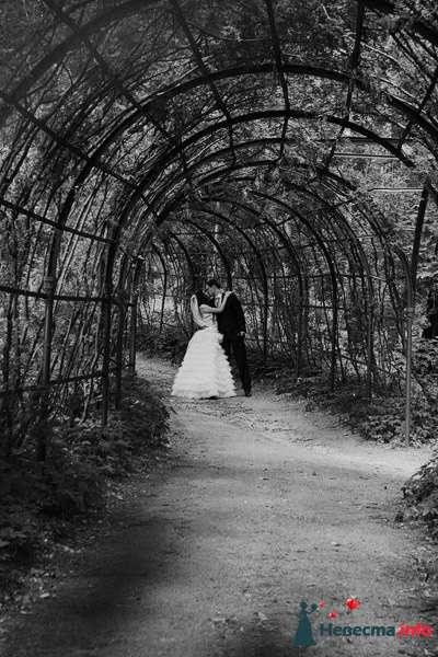 Фото 125589 в коллекции weddings - Невеста01
