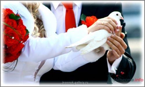 Фото 16089 в коллекции Свадебные Фото - Студия Творческой Фотографии