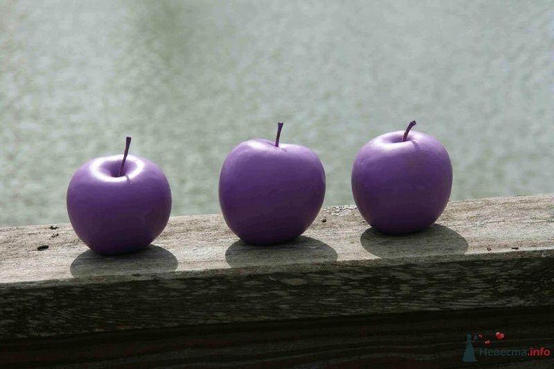 Яблоки сиреневого цвета для оформления фотосессий - фото 38770 Хлоя