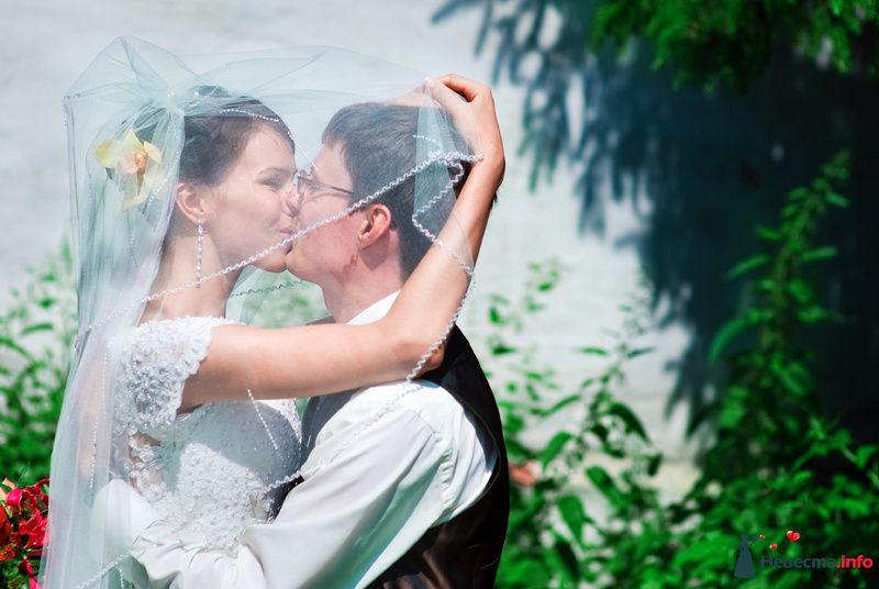 Фото 127536 в коллекции Свадьбы - Свадебный фотограф Трейго Любовь