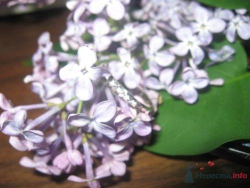 Фото 22248 в коллекции Мои фотографии - vredinka