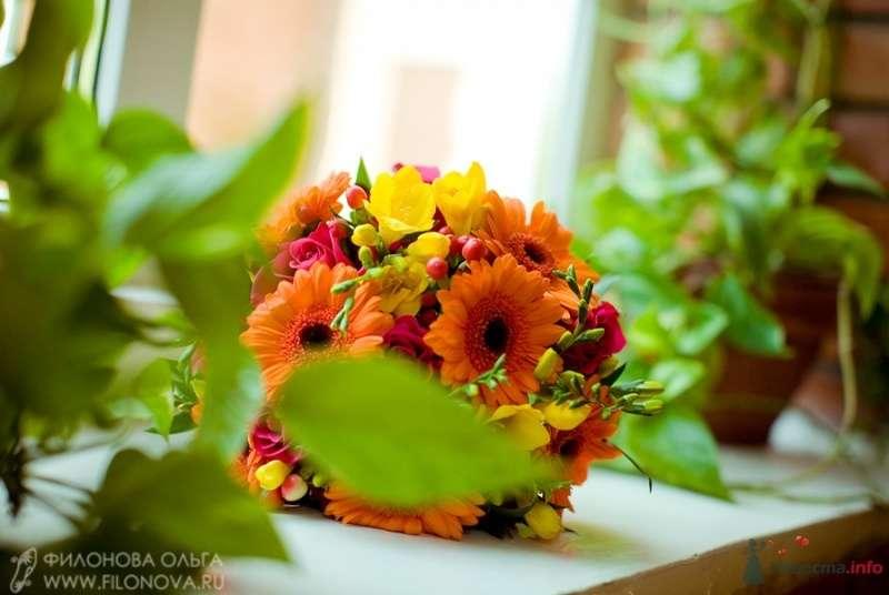 Фото 65534 в коллекции Свадьба Кристофера и Марины - Фотограф Филонова Ольга