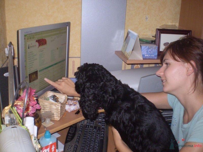 Ну, хозяйка, что там про собачью свадебную моду пишут? - фото 35964 Невеста01