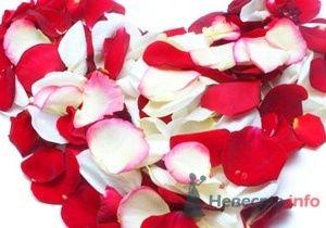 Лепестки роз - объём 8 л. всего за 1300 р. - фото 15887 Невеста01