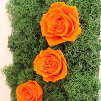 Декор-рамка со стабилизированным мхом и розами