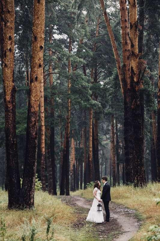слабость снова, свадебная фотосессия в сосновом лесу немеют руки пальцы