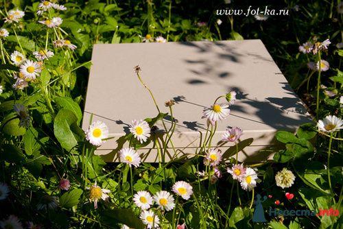 пример фотокниги - фото 112609 Фотограф Резник Екатерина