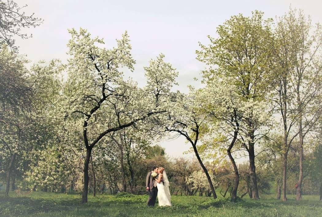 Фото 2084672 в коллекции Свадебная подборка фотографий - Фотограф Roman Barabanshchikov