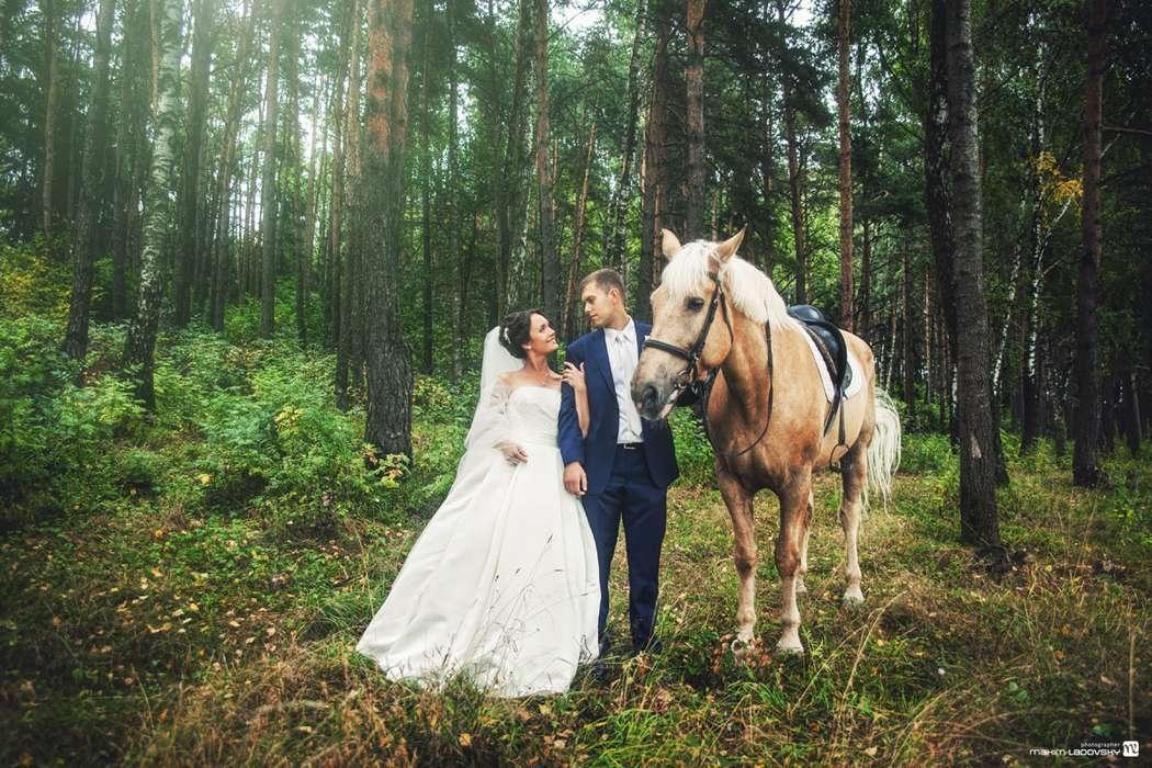 Фотография молодоженов с лошадью - фото 2164520 Фотограф Макс Ладовский