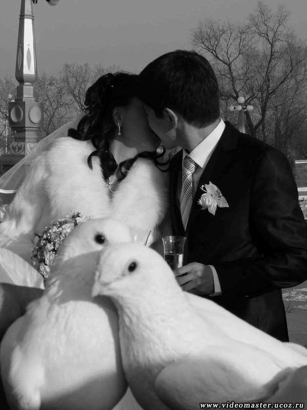 "Свадьба - фото 2176260 Компания ""ВидеоМастер"""