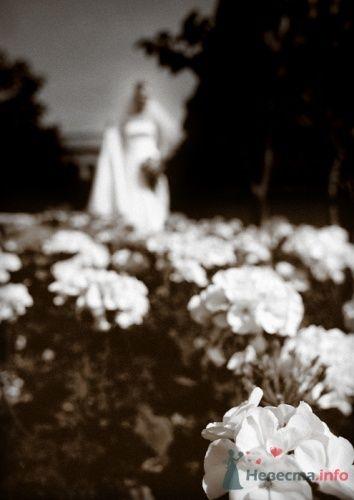Фото 15675 в коллекции IN real WEDDING WE TRUST…Engel-Ruban - Евгений Энгель-Рубан